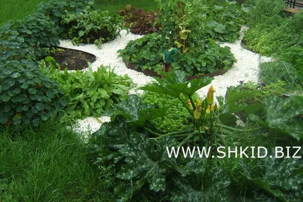 Декоративный огород  Усадьба Алексино