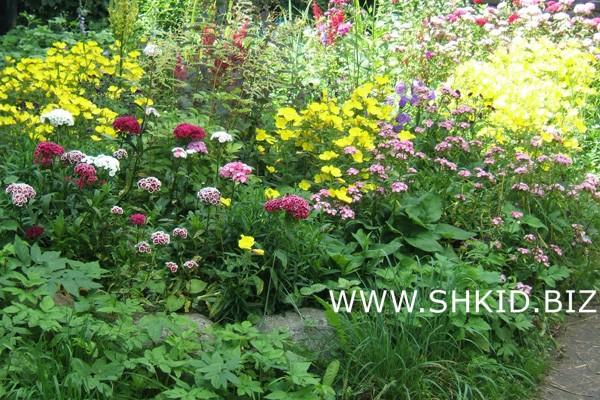 Ирландский сад 31