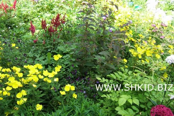 Ирландский сад 33
