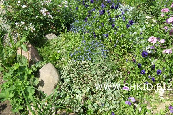 Ирландский сад 36