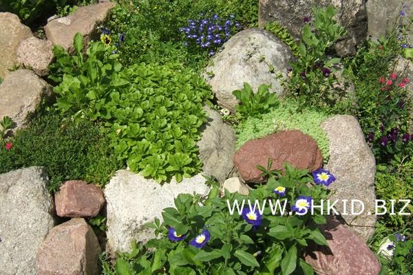 Ирландский сад 41