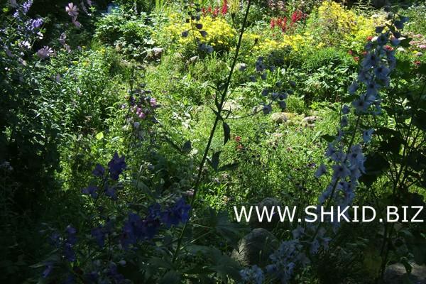 Ирландский сад 45