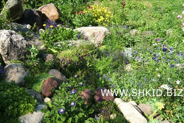Ирландский сад 51