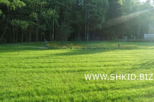 Спортивный газон Усадьба Алексино