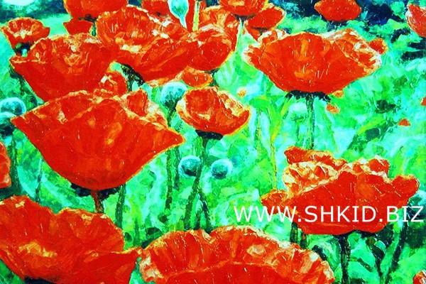 Цветы. Маки